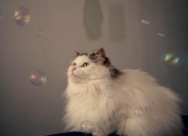 lou lou bubbles e