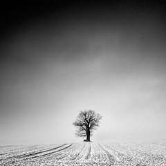 [ the oak ] (panfot_O) Tags: winter blackandwhite bw snow cold tree nature monochrome field square landscape one oak fineart minimal silence serenity serene lonely minimalism solitary contemplation