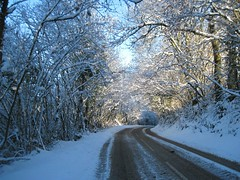 SNOW!!!!! (joysaphine) Tags: road old trees winter white snow cold tree green apple beautiful leaves pine wales wonderful cherry geotagged oak ancient carmarthenshire soft flickr december joy walnut large deep fluffy fresh holly clean willow elder wise pear ash birch trunks straight rowan larch leafy twisted beech hazelnut 2010 bendy crabapple sweetchestnut abies mycountry crackwillow stunningviews itsallaboutlight joysaphine winter20102011 b4300 allsortsthroughdec4emberandsnow horsechectnut