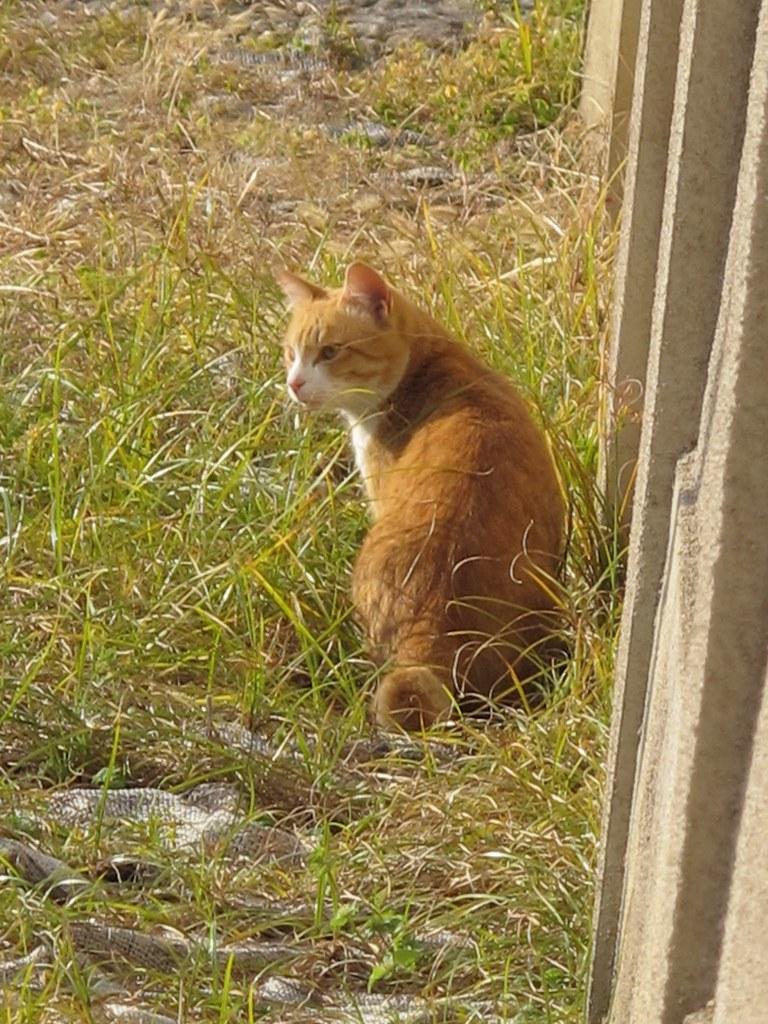 四天王寺の猫