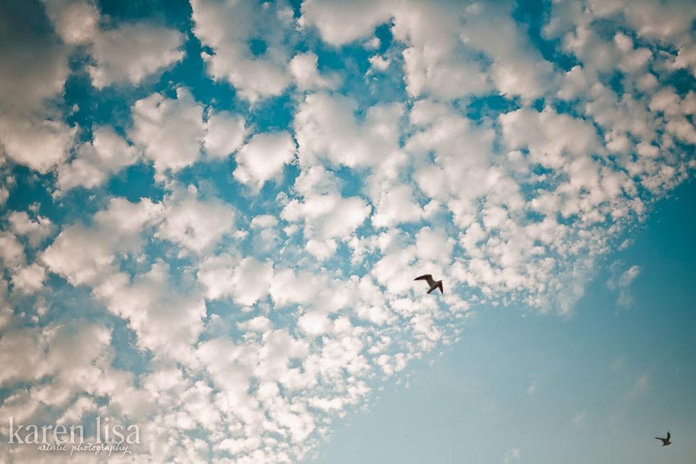 winter clouds & birds