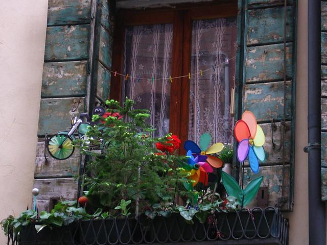 窓辺の植物のフリー写真素材
