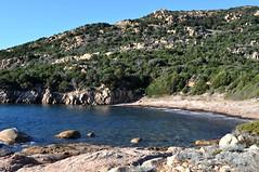 La plage de posidonies d'arrivée des sentiers de Roccapina et de Mariola