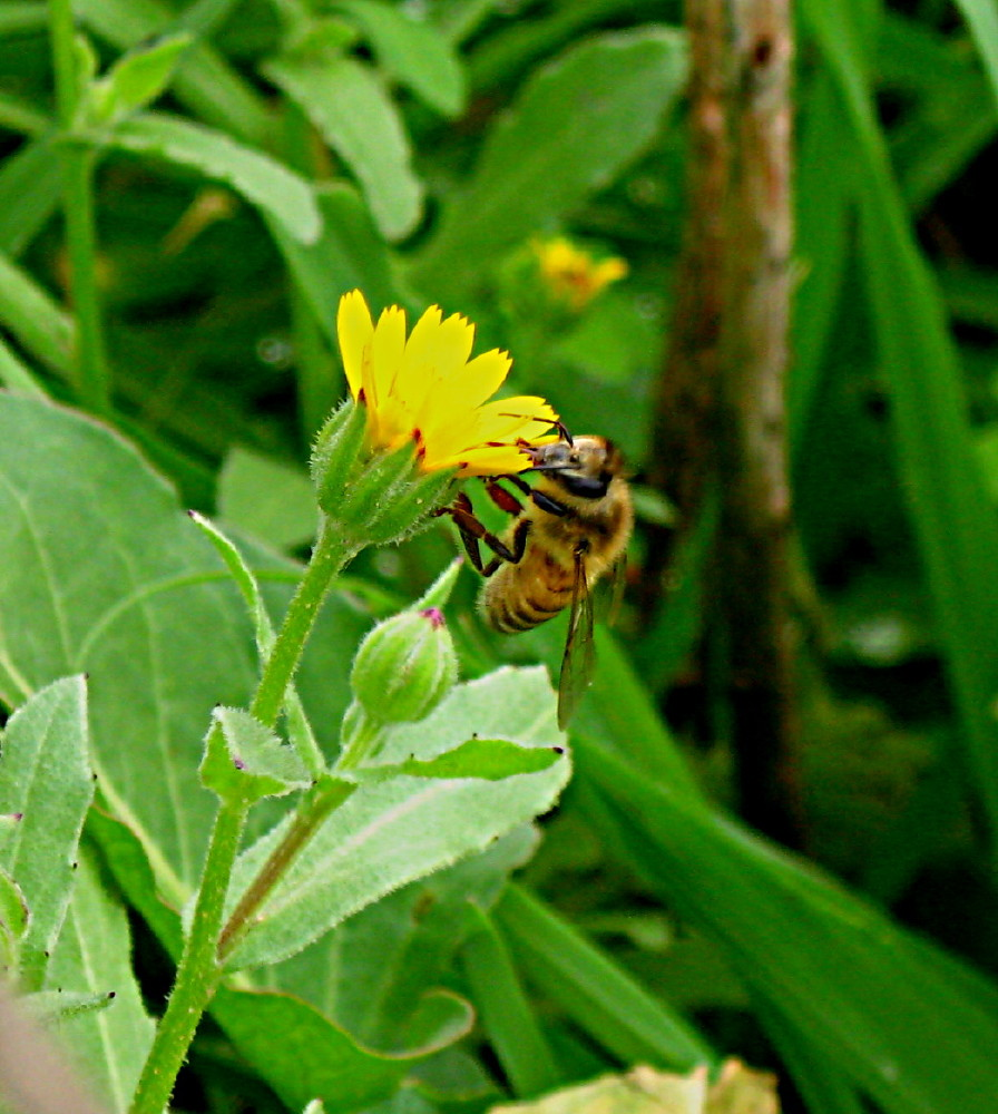 05-02-2011-flower-yellow-bee