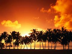 [フリー画像] 自然・風景, 夕日・夕焼け・日没, 海, 樹木, やしの木, 201106021900