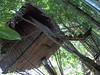 100_0198 (travellersai) Tags: kerala treehouse wayanad teaestate wildboar bandipur chital vythri banasuradam soojiparafalls streamvalleyresorts