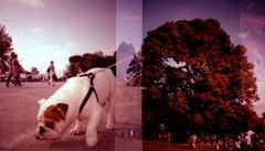 Mi servirebbe un alberello.... (Lorenzo Carnevali) Tags: cane alberi mi lomo fuji cross crossprocess mini un diana firenze 100 process provia settembre 2010 cascine alberello ruralia fotofatteacaso dianamini servirebbe analogicait