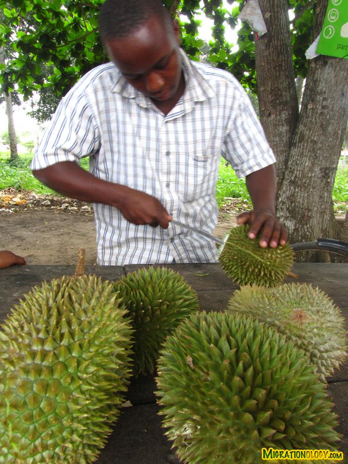 zanzibar-durian