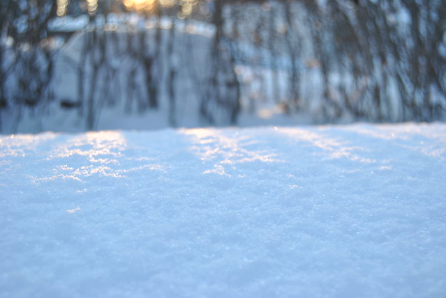 20110126 - winter 074