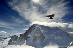 Flying at 3842 (aryapix) Tags: france mountains bird clouds montagne cumulus nuage chamonix mont blanc valle