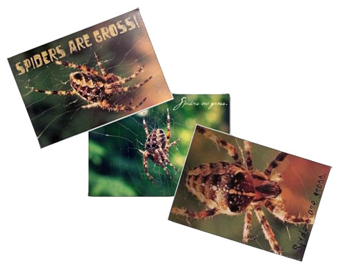 3 spider postcards