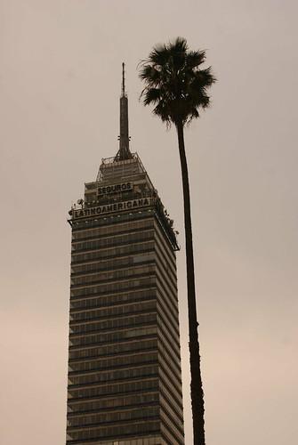 La palma mas alta del mundo by FotoMimo