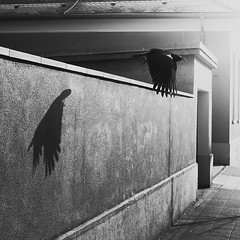 Fly my love! (Martin Gommel) Tags: street blackandwhite bw bird 6x6 contrast germany sw schwarzweiss karlsruhe kontrast vogel 1x1 quadrat quadratisch img7639