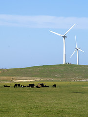 Moo (johnno_oz) Tags: green power cows windmills olympus victoria moo methane e500