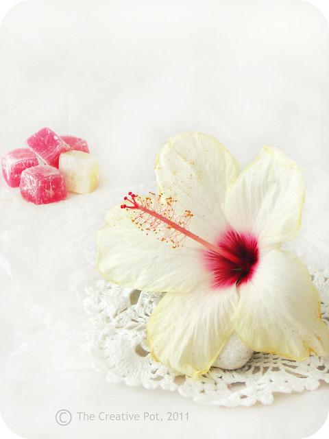 Vanilla Rose Panacotta a-w