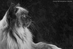 Gucci II (Majed Al-Shehri   ) Tags: bw photography mac nikon explore saudi majed  shehri     alshehri  shehrim