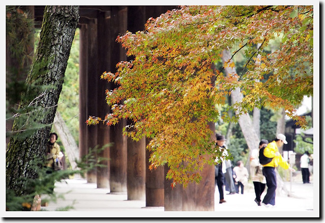 20101117_112800_唐招提寺