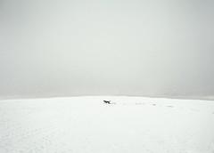 Busca (Ibai Acevedo) Tags: winter dog snow beach please nieve go places playa can perro dont invierno montauk mapa busca masnou