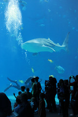 Georgia Aquarium (BrianLy) Tags: atlanta acquarium pycon pycon2010