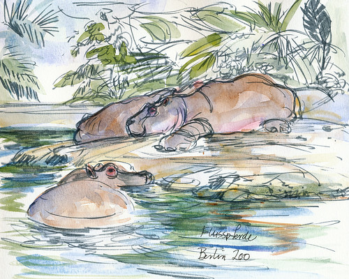 Berlin zoo: lazy, happy hippos