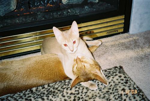 Pharaoh hugging Phoenix