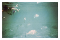(Kayla Clements) Tags: ocean sea fish color film swimming 35mm mexico underwater snorkel snorkeling disposable