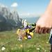 Blumen Seiser Alm / Flowers
