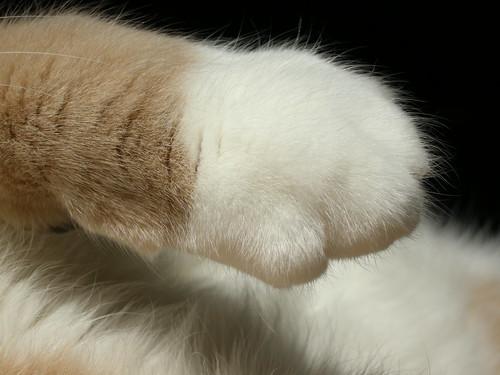 Michael's Paw