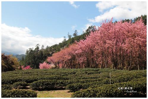 2011-03-04 陽明武陵 306 r