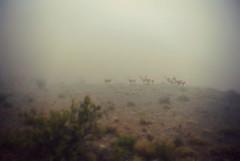 (Tachameladoble (instagram.com/juanignaciovidela)) Tags: color argentina fog nikon day mendoza niebla llamas montaas villavicencio tachameladoble cordolleradelosandes