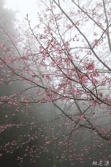 2011/03/19 南投~桃花源(二) ^ ^