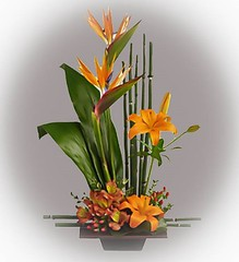 "#17ED $80 Stylized Tropical Arrangement • <a style=""font-size:0.8em;"" href=""http://www.flickr.com/photos/39372067@N08/5552115892/"" target=""_blank"">View on Flickr</a>"