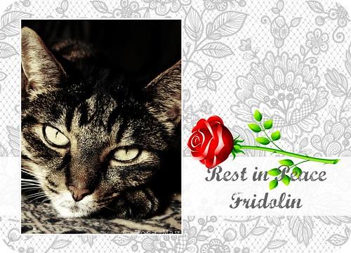WCB #303 - RIP Fridolin