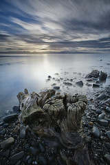 Waharau, Firth of Thames, NZ (gregheath) Tags: newzealand beach water shore coastline treestump firthofthames waharau