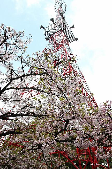 阿里山櫻花季陰天版17
