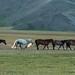 Lindos cavalos