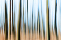Forest (digoarpi1) Tags: abstract forest sunlight nobody saturatedcolou green autumn red largegroupofobjects day brown nature glowing horizontal yellow trees blurred midday healthylifestyle frontview color outdoors treetrunks image landscape