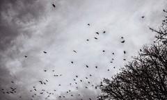 * (PattyK.) Tags: birds ioannina greece epirus ipiros griechenland ilovephotography amateurphotographer sky