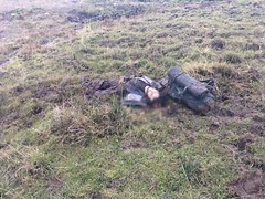 te dn Karadeniz'de ldrlen PKK'llar! (iktidarhaberleri) Tags: dn gncelhaberleri ite itednkaradenizdeldrlenpkkllarhaberleri itednkaradenizdeldrlenpkkllaroku karadenizde mesudiye ldrlen ordu pkkllar