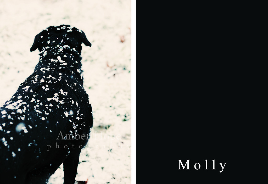 Molly in the snow.