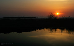 Hilbre Island Sunset (David Chennell) Tags: sunset reflection silhouette pond wirral merseyside riverdee hilbreisland natterjack