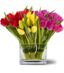 "#07V $75 30 Tulips bundled in rectangle vase $75 • <a style=""font-size:0.8em;"" href=""http://www.flickr.com/photos/39372067@N08/5402993588/"" target=""_blank"">View on Flickr</a>"