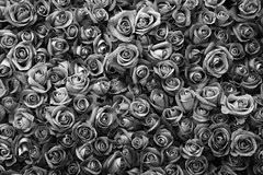 [Free Image] Flower/Plant, Rosaceae, Rose, Black and White, 201102030700