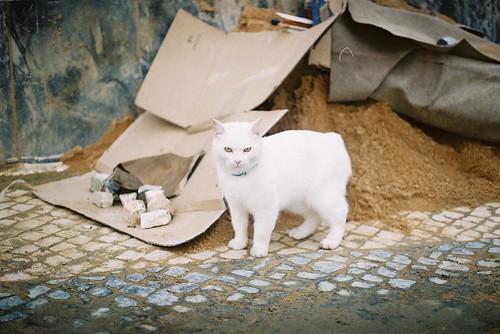 o gato branco