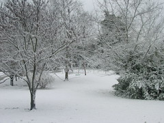Snow in Tennessee