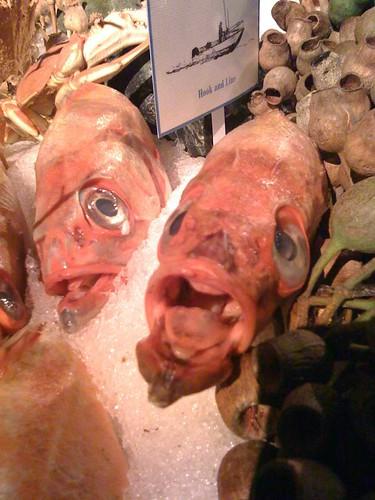 SLN Fish