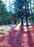 Light Through the Pines - pastels