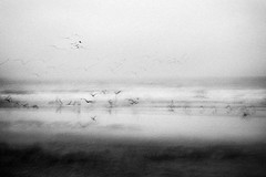 Vibrations (Effe.Effe) Tags: bw blur monochrome seagull grain bn gabbiani mosso