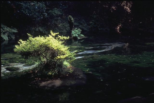 水辺の植物のフリー写真素材