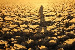 Walking Shadow (C_MC_FL) Tags: light shadow selfportrait field silhouette canon photography eos austria licht sterreich fotografie walk feld sunny ground tamron sonnig schatten acre gehen acker boden erde abendlicht eggenburg umris kontur 18270 sebstportrait 60d b008